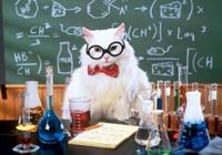 Кошка-химик