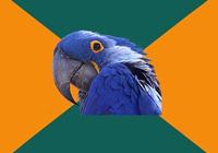 Папугай параноик