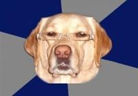 Рассистская собака