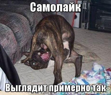 """Волонтеры """"Вернись живым"""" за год собрали почти 53 миллиона гривен на нужды украинской армии - Цензор.НЕТ 7394"""