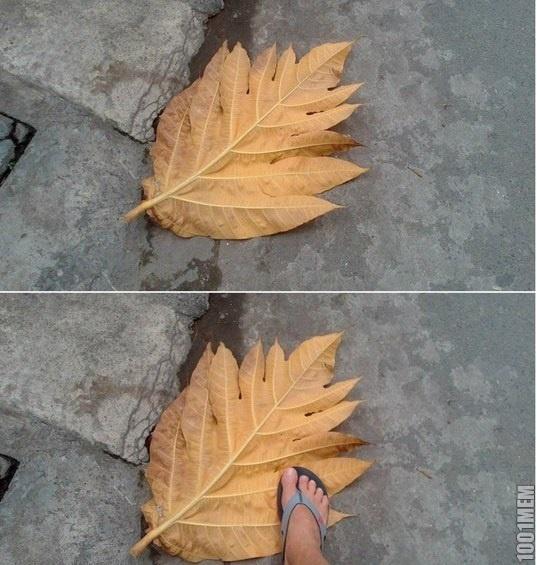 Осень, небольшой листочек.