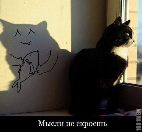 кот спалился