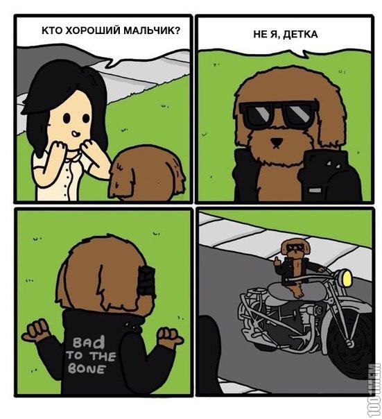 Плохой пес