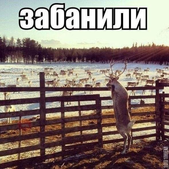 Европарламент приостанавливает сотрудничество с РФ и закрывает доступ к своим помещениям для посла России - Цензор.НЕТ 2166