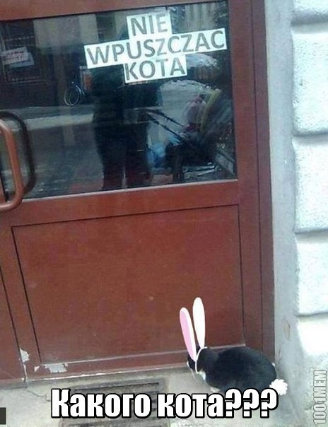 Не впускать кота...