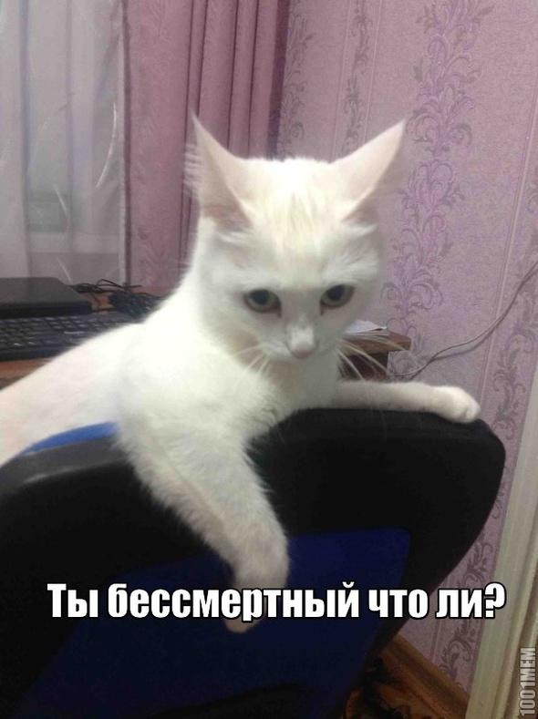 Картинки кот блатной