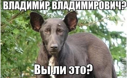 Владимир Владимирович???