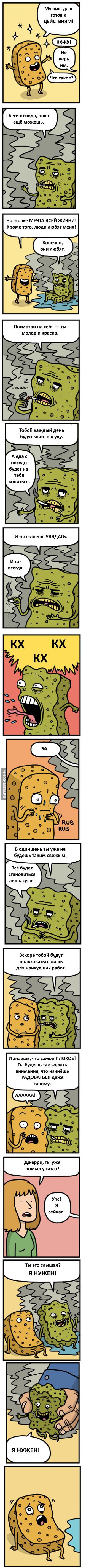 Жизнь губки