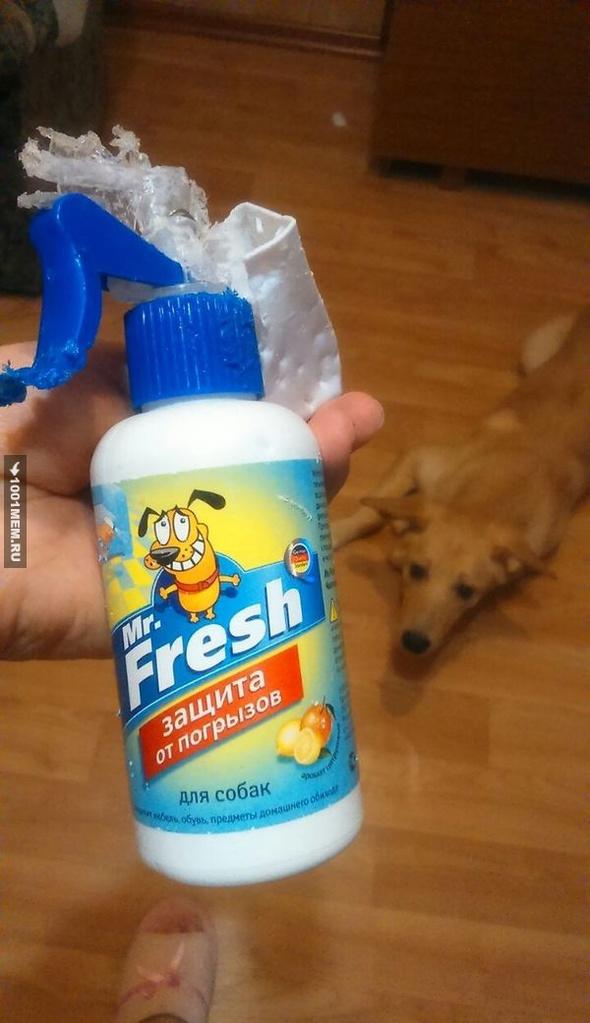 Купил своей собачке антигрызин