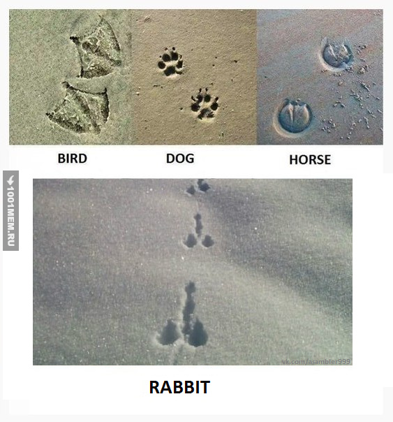 Следы птицы, собаки, лошади и ... зайца