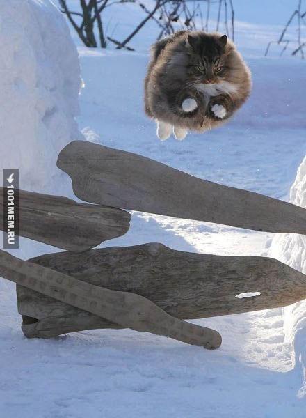 Грациозность этого кота зашкаливает