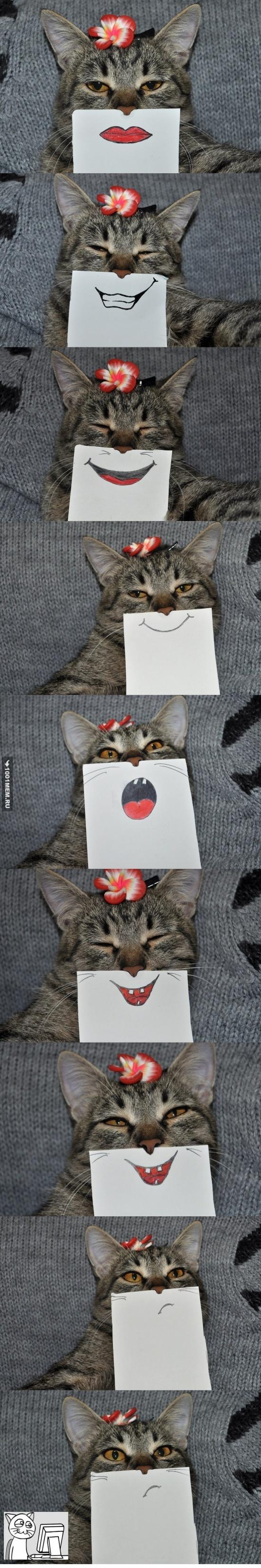 Когда очень скучно, но есть кот