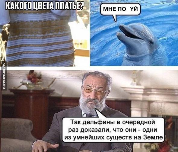 дельфины)