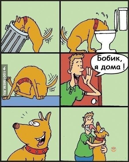 Собаки не так просты)