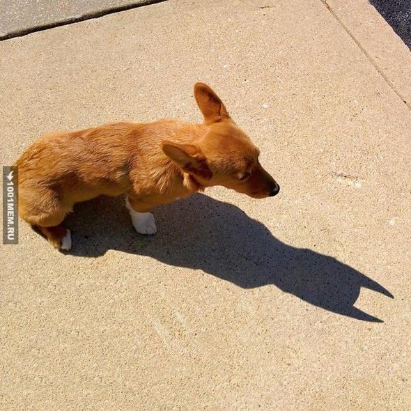 Пёс-бэтмен