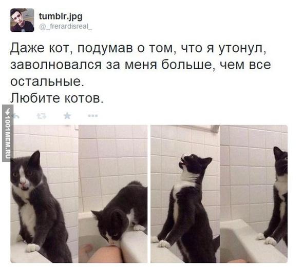 Коты-лучшие