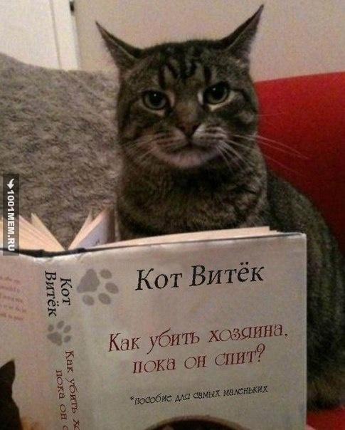 Кажется, мой кот что-то задумал...