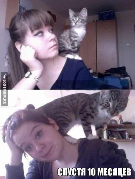 Котёнок вырос