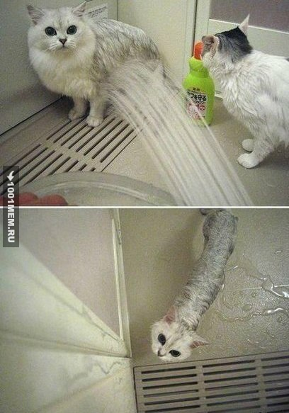 Алгоритм сжатия кота