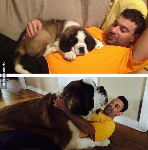 Совсем щенок