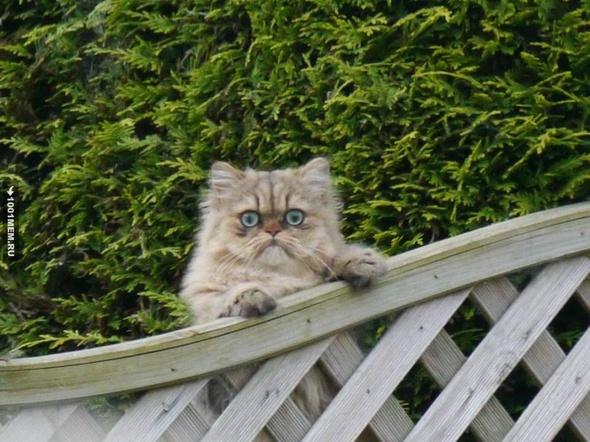 Жарил сегодня рыбу-гриль на заднем дворе, краем глаза заметил соседского кота