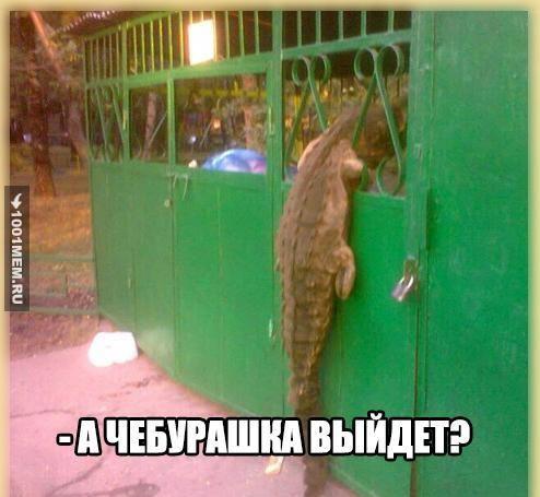 чебурашка