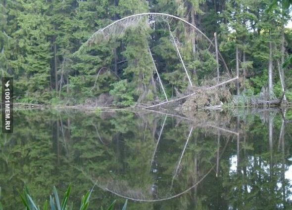 Лесной пакмэн