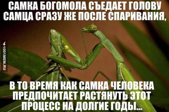 http://img.1001mem.ru/posts/3861000/3860176.jpg