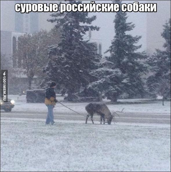 российские собаки