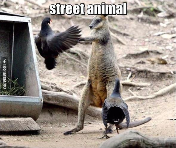 street animal