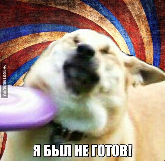 Бедная собачка...