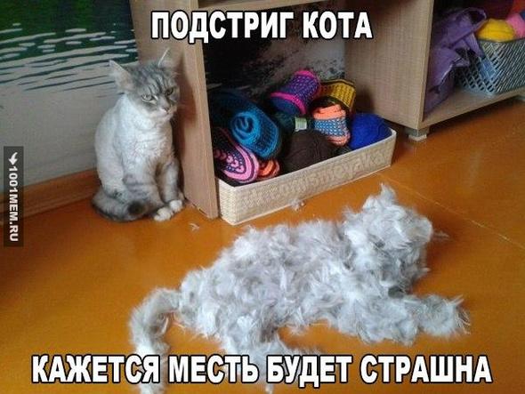 Кошачья месть...