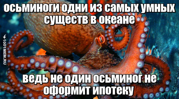 Даже осьминог круче чем ты!
