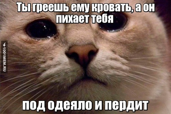 Кошачья жиза