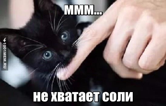 совсем котяру не кормят