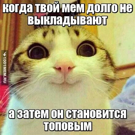 Мемо-кот