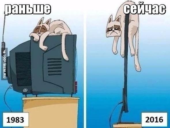 как коты лежали на теликах)