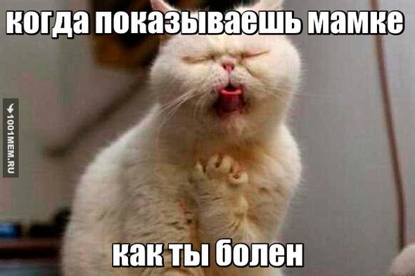 котик простудился или поперхнулся