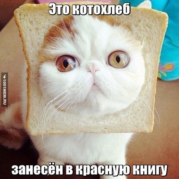 котохлеб