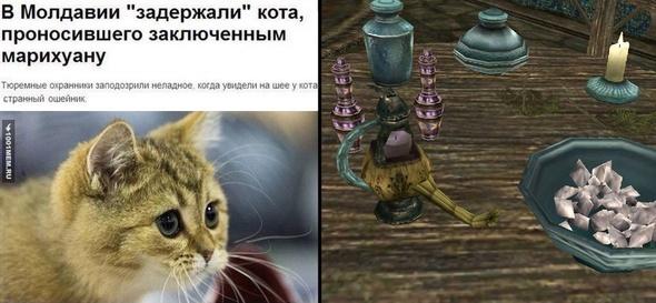 Каджит из Молдовы