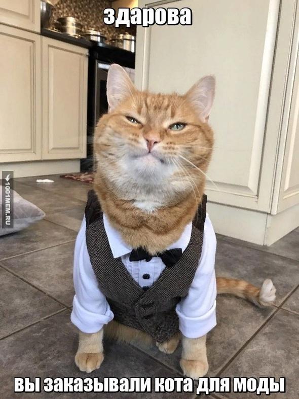 приколы коты модняки